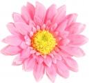 Pink Silk Daisy Flower