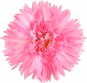 Large Hot Pink Silk Spiky Daisy Head Band Accessory