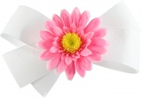 White Bow Pink Daisy Flower