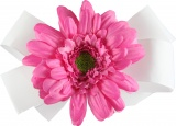 White Bow Pink Gerbera Daisy