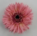 Pink Silk Spiky Daisy Flower Clip