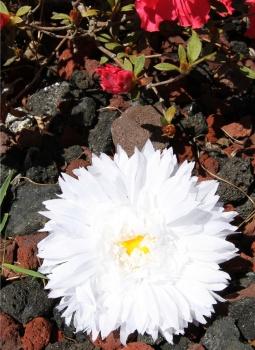 White Silk Spiky Daisy Clip